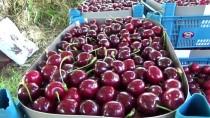 Çanakkaleli Meyve Üreticisinin Yeni Gözdesi 'Alman Kirazı'