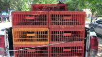 HÜSEYIN TEKIN - Uşak'ta 2 Bin Kınalı Keklik Doğaya Salındı