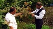 Sakarya'da 'Amerikan Beyaz Kelebeği' İle Mücadele