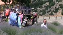 'Mor Tarlalar' Turizme Renk Katıyor