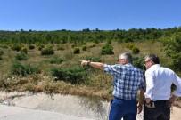 KADIR BOZKURT - İnönü Bal Ormanı Çalışmaları Tüm Hızıyla Devam Ediyor