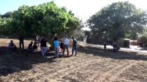 Arazi Yangını Ahıra Sıçradı, 53 Koyun Telef Oldu