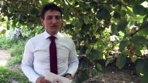 KOCADERE - Kivide Yüksek Kalite Ve Verim İçin 'Arılı Proje'