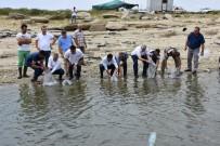 Manisa'daki Baraj Gölü Ve Göletlere 100 Bin Balık Bırakıldı