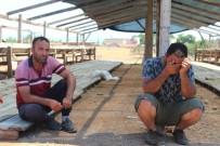 ARAÇ PLAKASI - Antalyada Kiralık Tır Şoförünün 25 Büyükbaş Hayvanla Ortadan Kaybolduğu İddiası