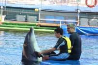 SONAR - Engelli Çocuklar, Yunus Balıkların Öpücüğüyle Moral Buldular