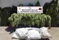 Balıkesir'de Jandarma 23 Kilo Esrar Ele Geçirdi