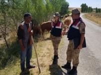 ALARM SİSTEMİ - Jandarmadan Hayvan Hırsızlığına Karşı Uyarı
