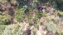 OVAKENT - Jandarmadan Drone İle Zehir Takibi
