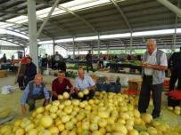 HASANLAR - Hisarcık'ta Halk Yerli Kavunu Tercih Ediyor