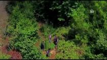 Ormandaki Uyuşturucuyu Drone Ve Foto Kapanla Buldular