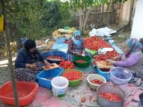 AFŞAR - Bütün Köy Toplanıp İmece Usülü Salça Yapıyor