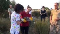 HÜSEYIN TEKIN - Vali Kocabıyık Tedavi Edilen Kuşları Doğaya Bıraktı