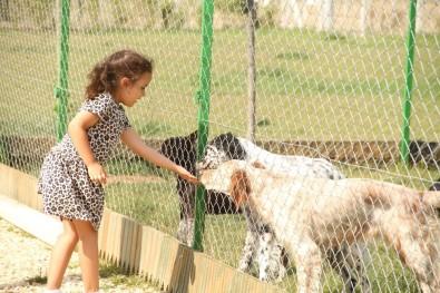 (Özel) Bayramlarda Köpek Otellerinde De Yer Yok