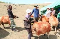'Koç Katımı' Geleneği Tunceli Yaylalarında Yaşatılıyor