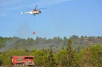 ORMAN VE SU İŞLERİ BAKANI - Ayvalık'ta Orman Yangını