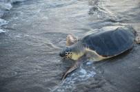 MUHITTIN PAMUK - Yaraları Tedavi Edildi, Denize Kavuştular