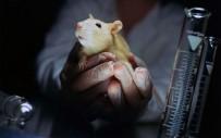 KORKU FILMI - Denek Hayvanlarının Haklarını Savunacaklar