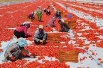 Tunceli'den Avrupa'ya Kuru Domates İhracatı