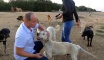 (ÖZEL) Çatalca'da Köpeklerin Ormana Terk Edilmesine Hayvanseverlerden Tepki