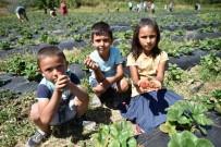 Adana'da Tarımı Güçlendirme Projeleri