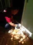 DEMİR KORKULUK - Ayağı Demir İle Duvar Arasına Sıkışan Kedi Kurtarıldı