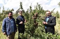 TATLARıN - Ahlat'ta Elma Yetiştiriciliği