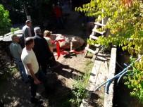 Artvin'de Boş Havuza Düşen İnek Vinç Yardımıyla Kurtarıldı