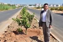 TANSU ÇİLLER - Tütüncü, Kepez'in Yeşil Seferberliği'ni İnceledi