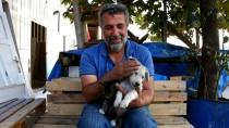 AGİT - Kedi Yavrusu İle Köpek Yavrusunun Dostluğu