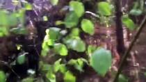GÜNCELLEME - Kastamonu'da Kamyon Uçuruma Yuvarlandı Açıklaması 3 Ölü