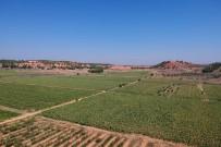 HALIL PEKDEMIR - Yerli Üretim Ayçiçekleri İlk Mahsulünü Verdi