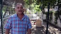 HÜSEYİN AYGÜN - Söke'de 'Hayvan Dostu Okul' Projesi