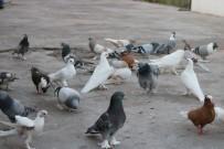 MUHABBET KUŞU - Uzmanlar Uyardı Açıklaması 'Beslediğiniz Kuş Katiliniz Olabilir'