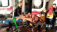 NECATI ÇELIK - Avcılar Ormanda Domuz Avlarken Ot Toplayan Vatandaşı Vurdu