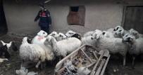 Çaldıkları Hayvanları Uyuşturucu Madde Karşılığında Takas Ettiler