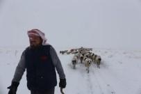 ÇIÇEKLI - Gürpınar'da Tipide Mahsur Kalan 2 Çoban Ve Koyun Sürüsü Belediye Ekipleri Tarafından Kurtarıldı