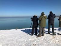 KıZKALESI - Beyşehir Gölü Milli Parkı'ndaki Kuş Varlığı Ortaya Çıkarılıyor