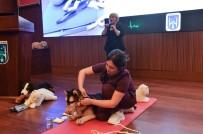 ALTINPARK - Büyükşehir Belediyesi, Hayvanlara Yönelik Çalışmalarını Sürdürüyor