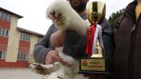 (Özel) Türkiye Şampiyonu Osmanlı Horozu 'Pusat'a Paha Biçilemiyor