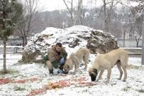 YEŞILTEPE - Sokak Hayvanları İçin Doğaya Yiyecek Bırakıldı