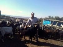 Çobanların Dünyasını Bir Çoban Yazdı