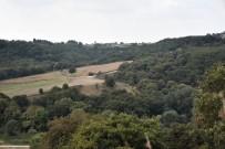 ÇORLU BELEDİYESİ - Çorlu'nun Tek Ormanlık Bölgesi Yaşamaya Devam Edecek