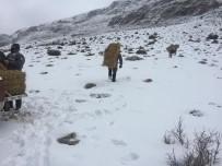 DEMİRKAZIK - Niğde'de Dağ Keçileri Yemlendi