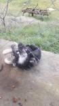 MECIDIYE - Bahçe Tellerine Sıkışan Köpeği İtfaiye Kurtardı