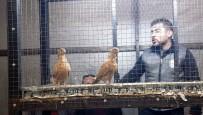 MUSUL - Egeli Güvercin Yetiştiricileri Nazilli'deki Mezatta Buluştu