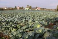 BARBUNYA - Karadeniz'in Gıda Ambarı Samsun