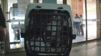 MUHABBET KUŞU - Otobüslerde Yeni Dönem En Çok Hayvan Severleri Mutlu Etti