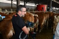 BÜLENT KORKMAZ - Ultrasonlu Gebelik Takibiyle Hayvan Varlığında Artış Sağlandı