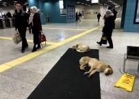 MARMARAY - Köpekler ısınmak için Marmaray'a sığındı